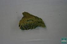 Зуб правый нижний 3 коренной (m3, dex  Mammuthus sp.)