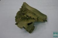 Череп мамонта (Cranium Mammuthus primigenius Blumenbach, 1799)