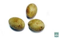 Яйца поганки красношейной