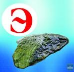 Эпидот