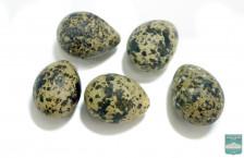Яйца чёрной крачки