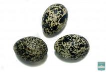 Яйца белой куропатки